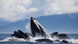 Топенето на леда ускорява разпространението на смъртоносен вирус сред морските бозайници