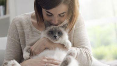 Не галете котките си по корема