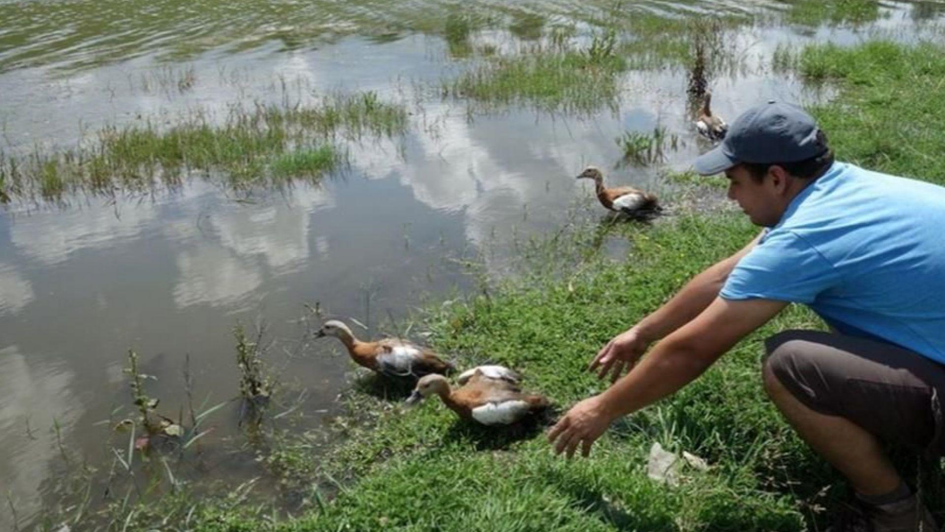 Търси се храна за защитени птици