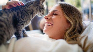 Поведението на котките може да отразява характера на стопаните