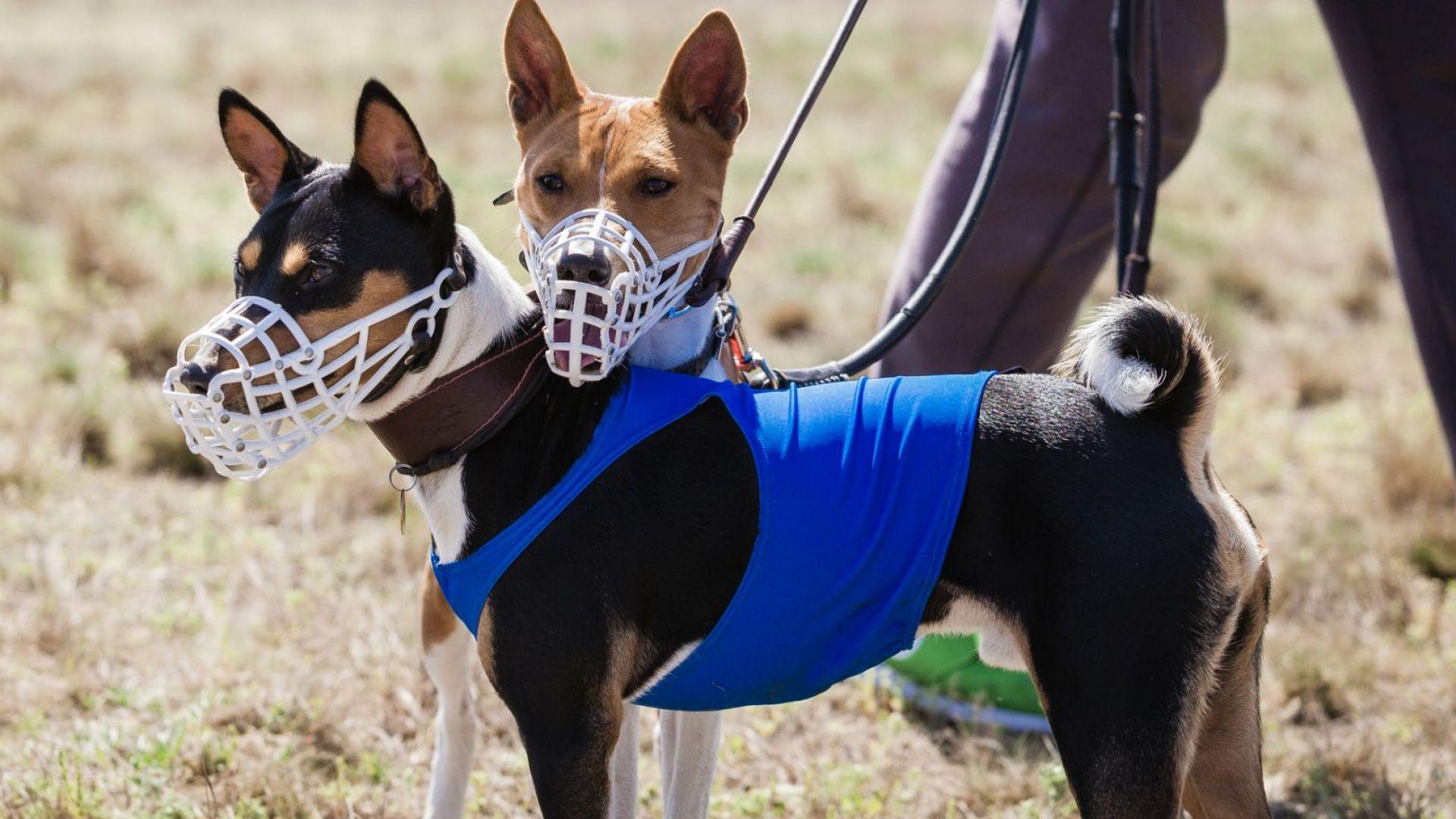 Д-р Мила Бобадова пред Dir.bg: Популизмът в НС заплашва живота на домашните кучета