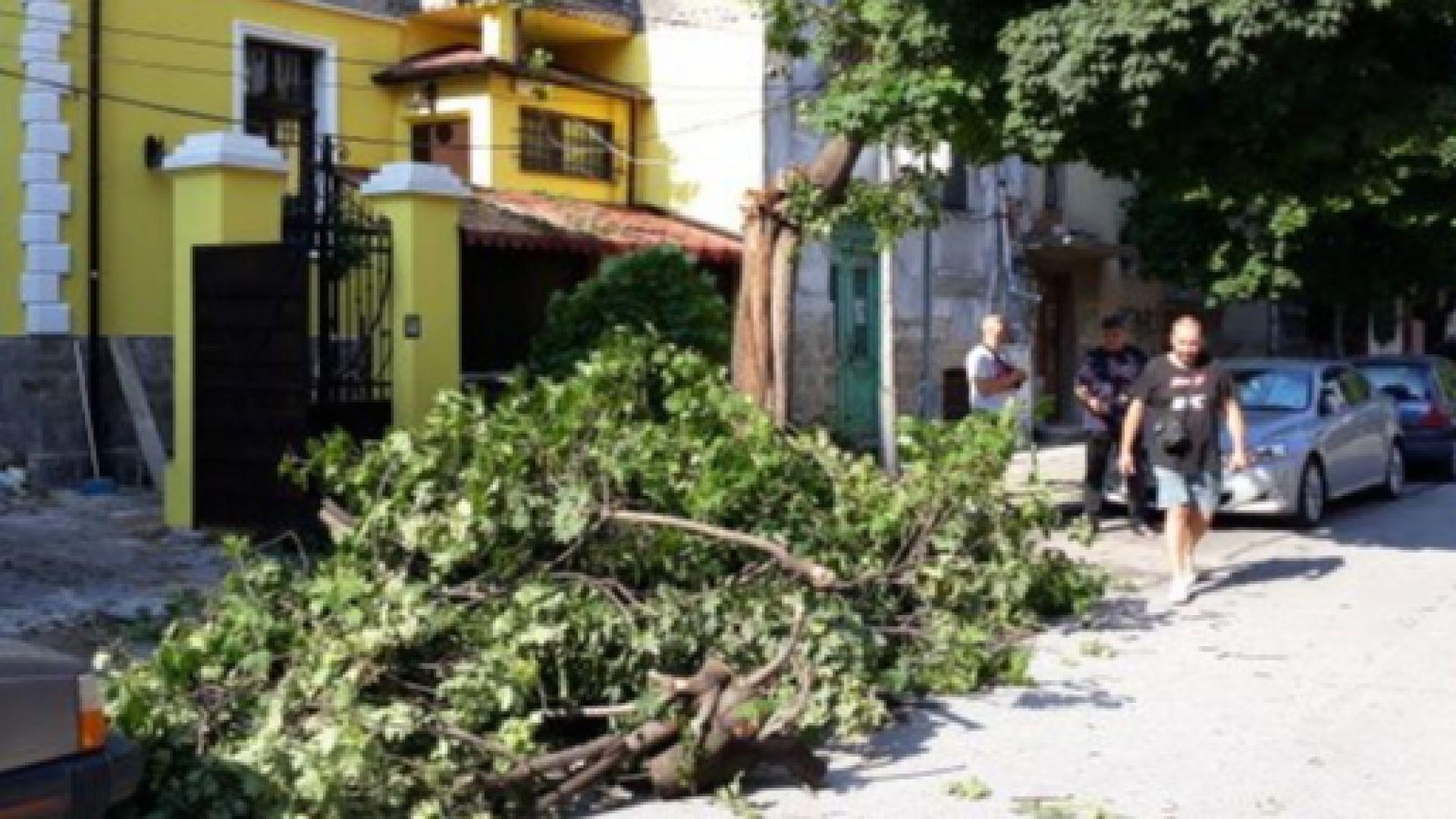 Дърво падна върху къща в Пловдив, друго потроши коли в бурята (снимки)