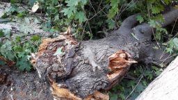 Голямо дърво падна върху две леки коли в Пловдив