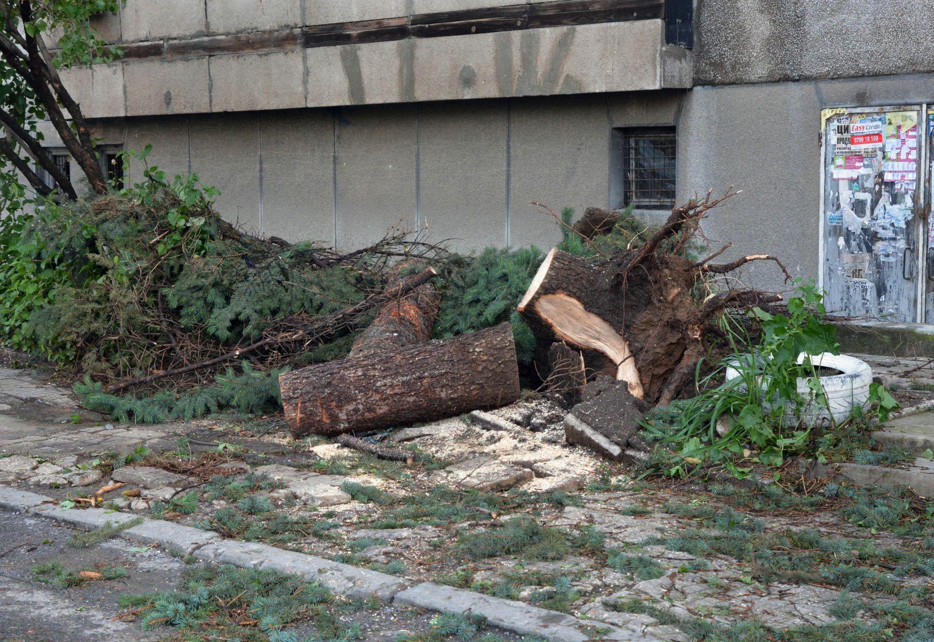 Паднало дърво затисна и уби пенсионер в Борисовата градина