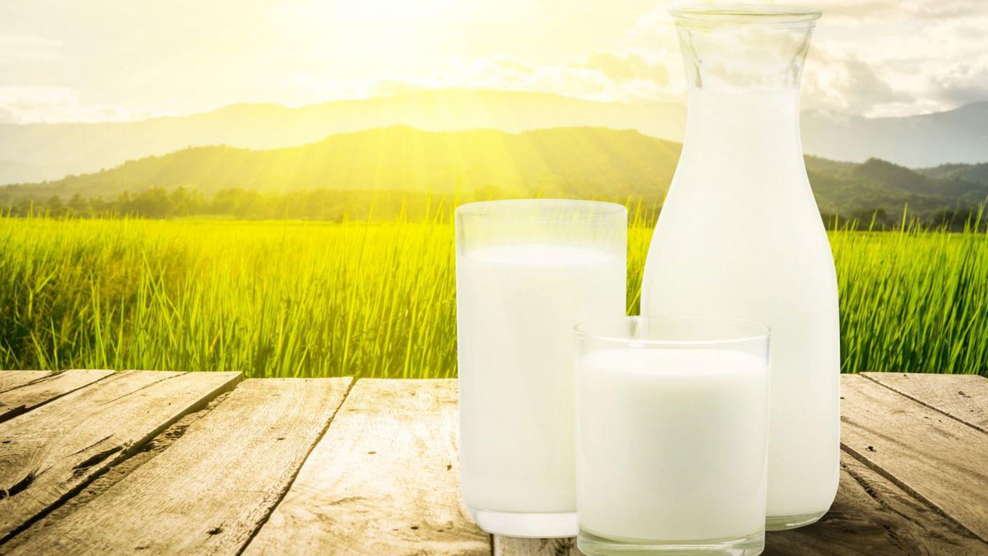 Първите изкупвачи на сурово мляко ще регистрират договорите си онлайн