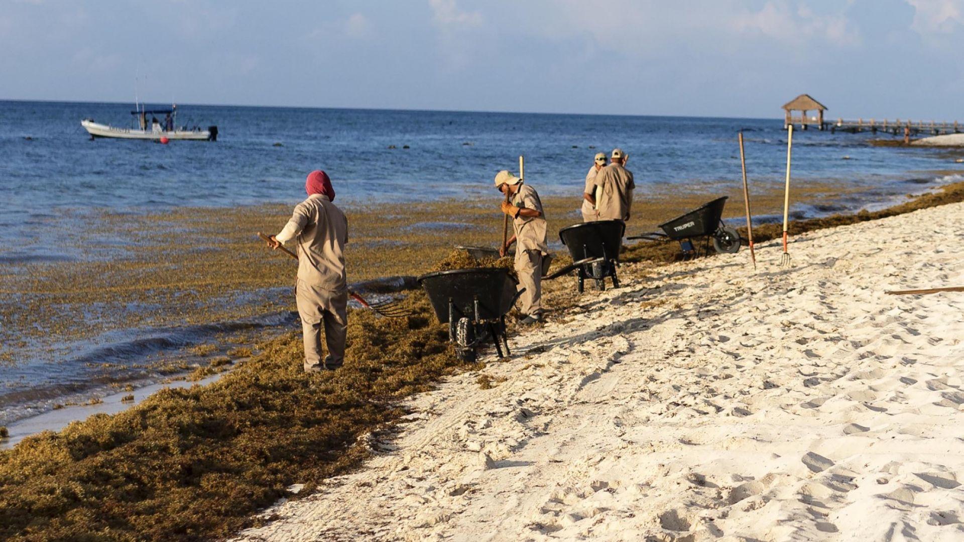 Затоплянето на  Средиземноморието може  да доведе до необратими щети