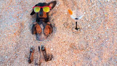 Кучето на плажа – само под чадър, с вода и...UV защита