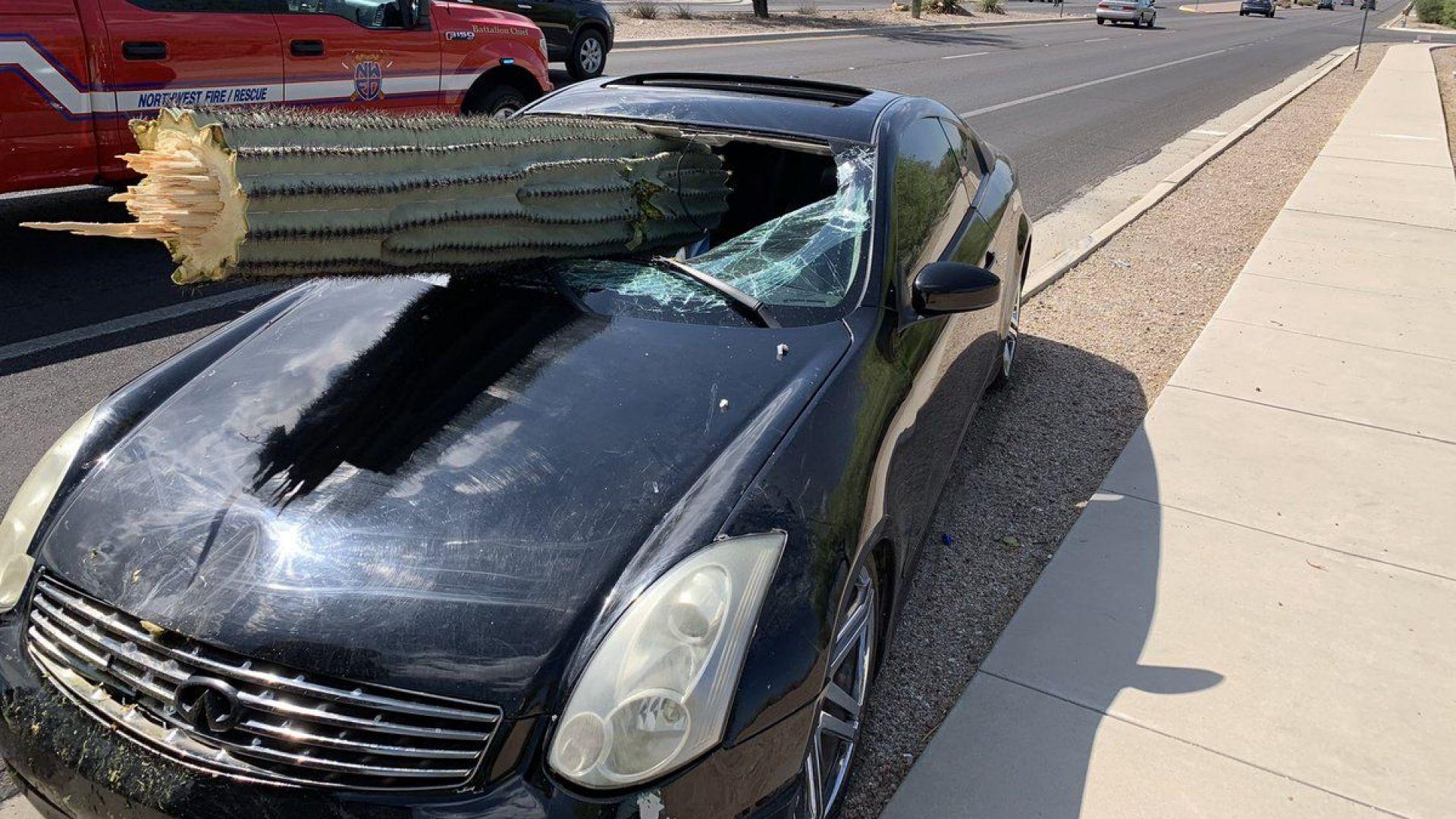 Шофьор оцеля след сблъсък с... кактус