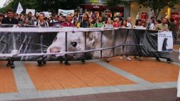 Убийства от суета: Протестът, за който не знаем