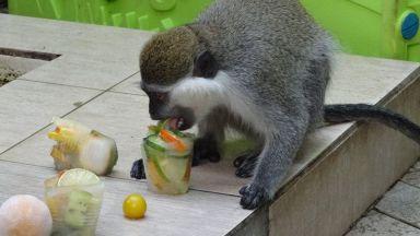 Животните във варненския зоопарк похапват замразени плодове (СНИМКИ)