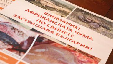 Почти 400 са вече избитите прасета в опит да се спре заразата