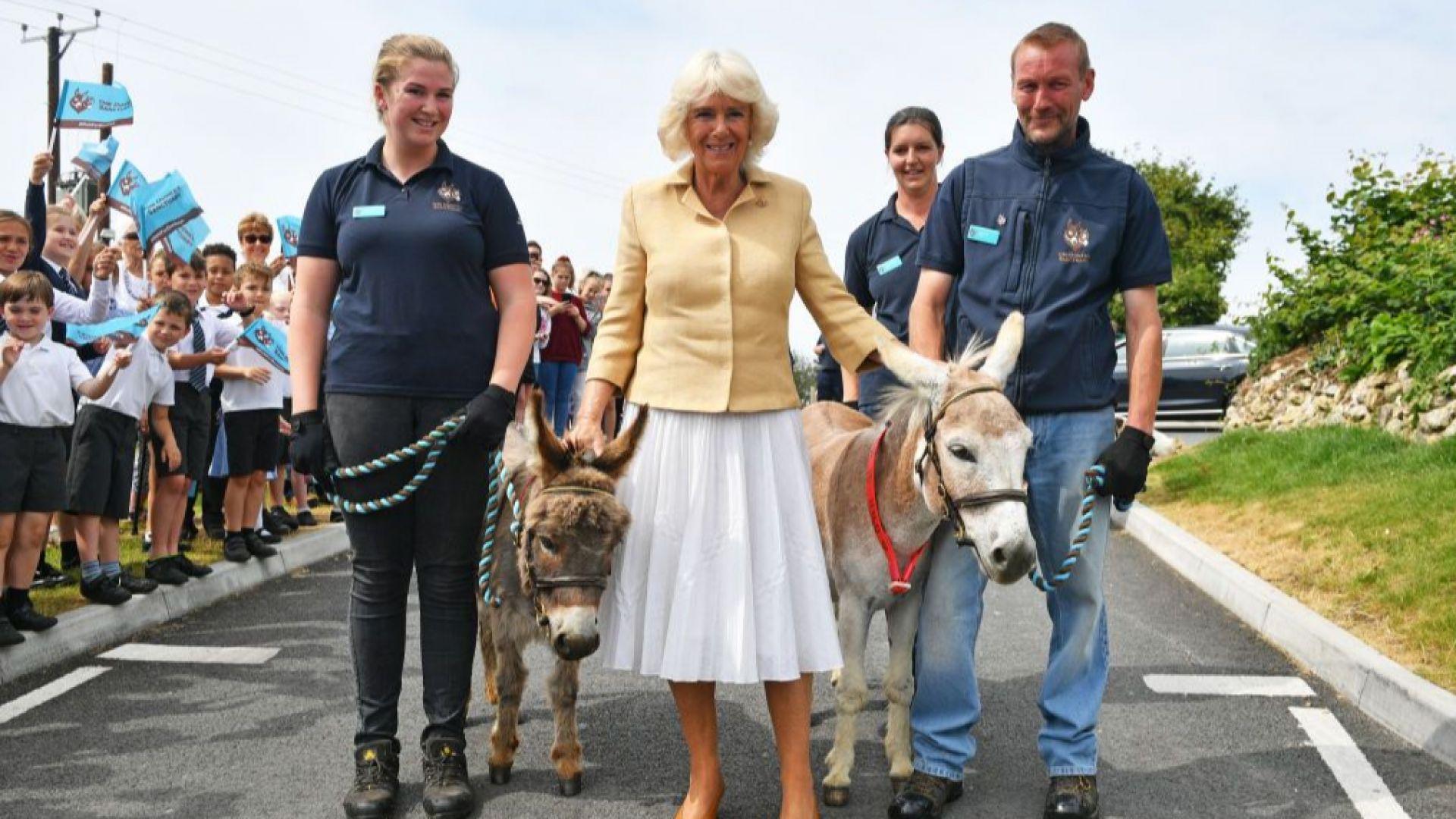 Камила отпразнува 72-ри рожден ден с магаретата Хари и Уилям