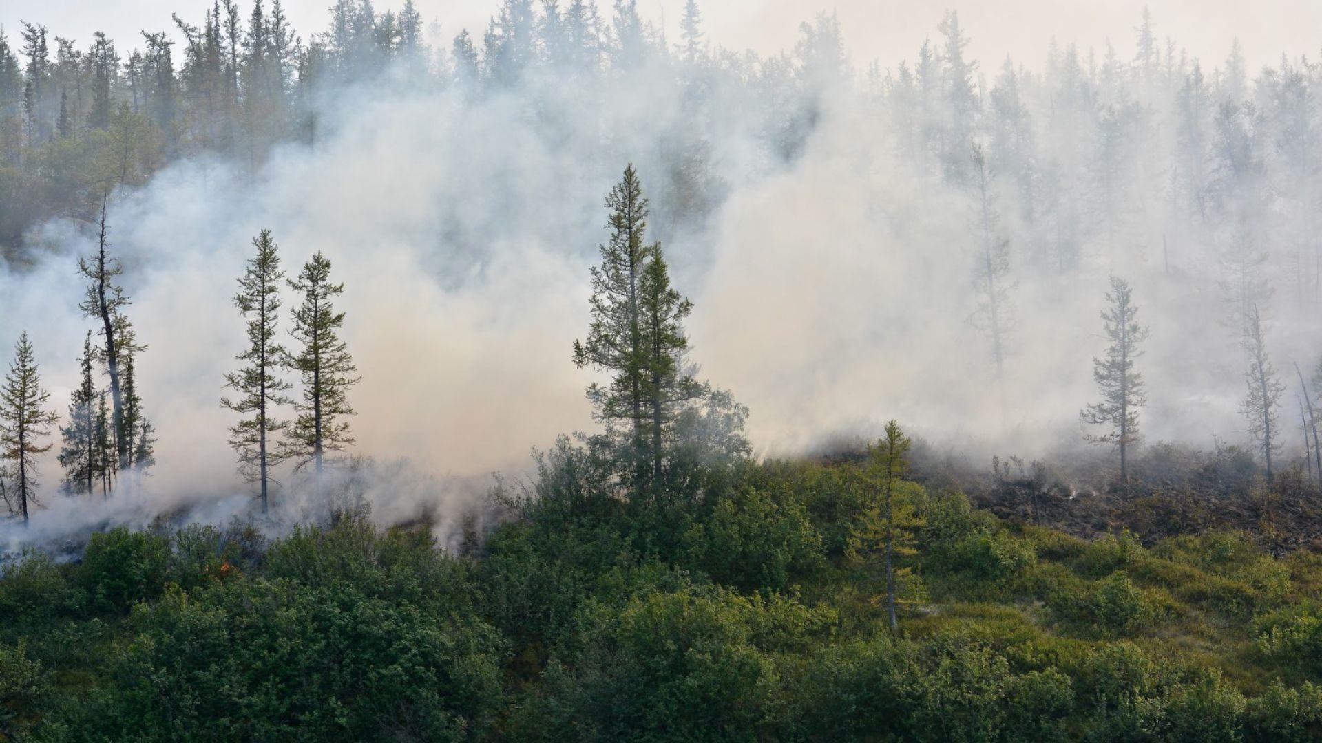 Повече от 100 години ще трябват на сибирските гори, за да се възстановят