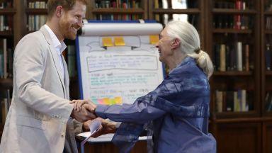 Принц Хари изпълни поздрава на шимпанзето (видео)