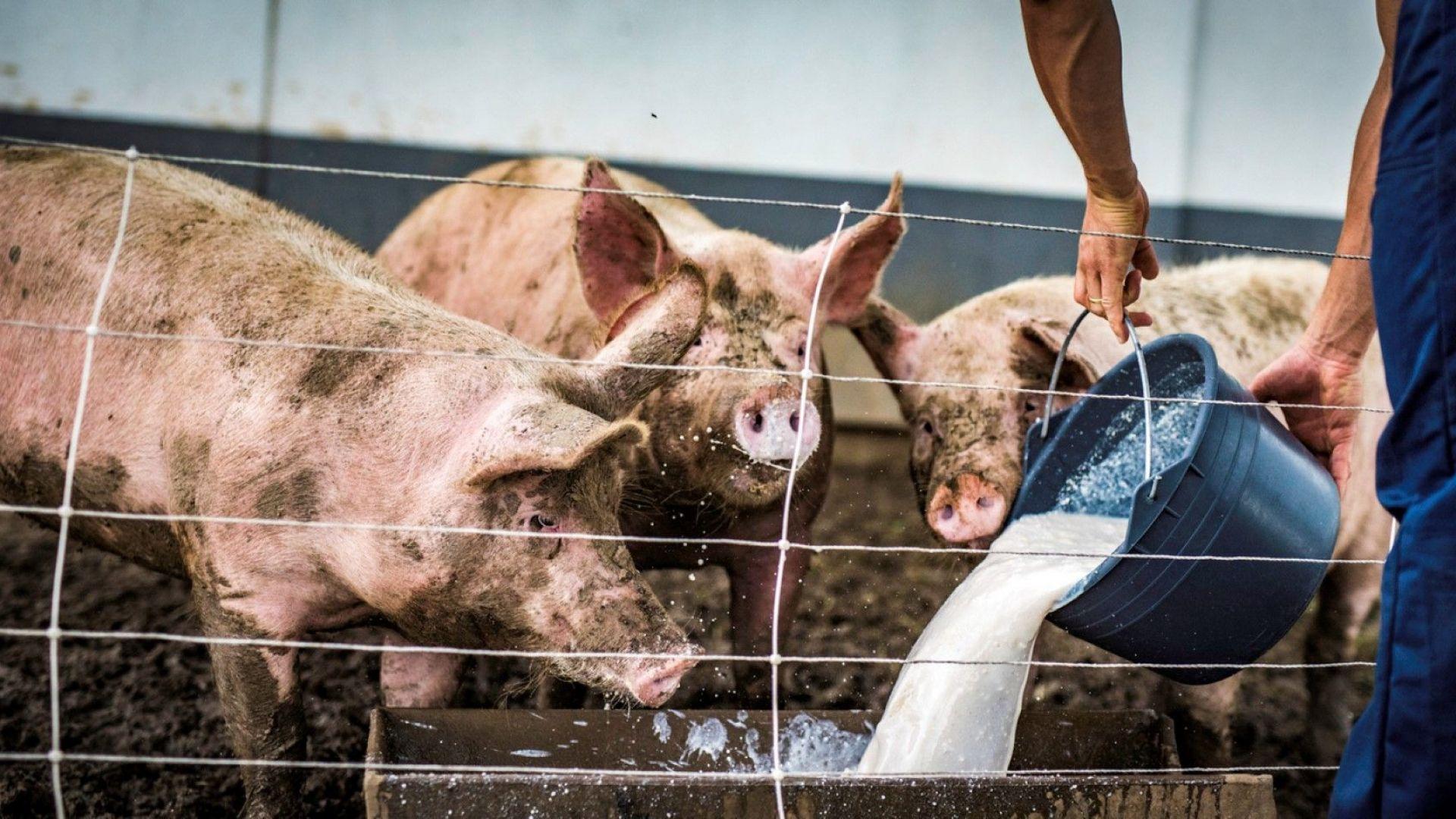 Дирекцията по храните в Ловеч призова стопаните да колят животните си