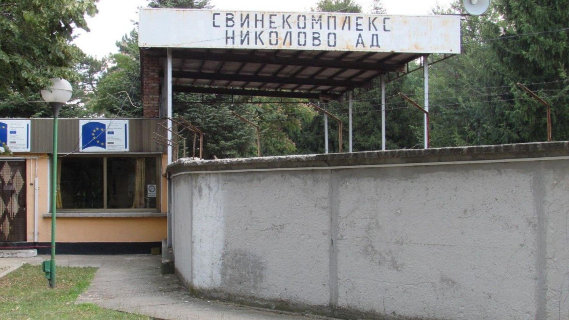 ЕК разочарована от България: Можете да загубите цялото си свиневъдство