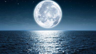 Лунната светлина влияе на жизнения цикъл на много растения и животни
