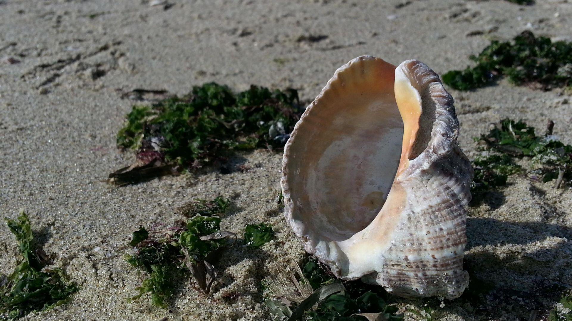 ИАРА върна в морето около 17 кг незаконен улов на рапани и миди