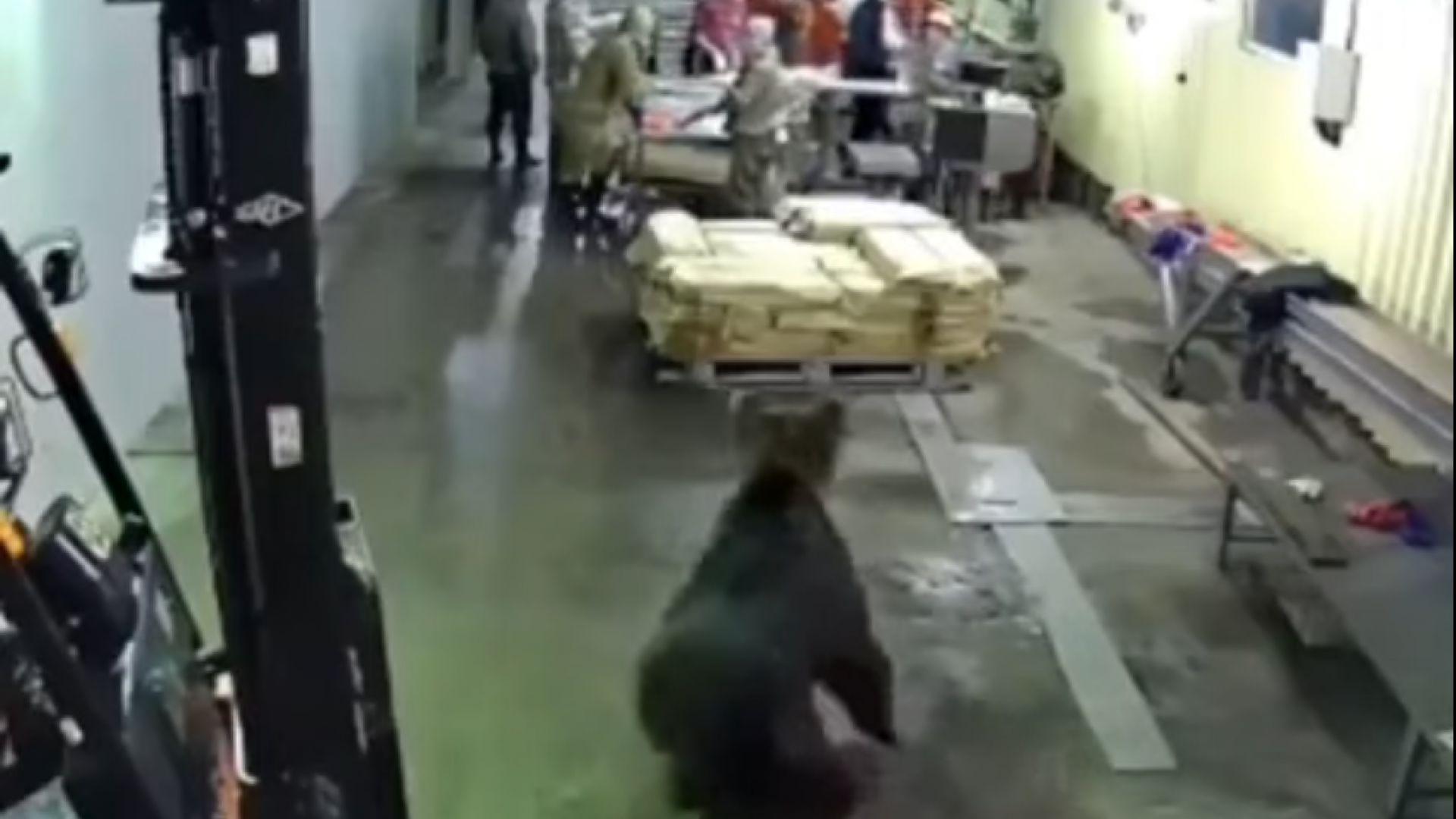 Снимка: Мечка нахлу в цех на рибен завод в Русия