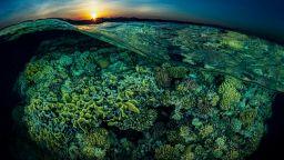 Спиращи дъха подводни кадри на Тобиас Фридрих