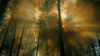 Сибирските горски пожари ще усилят глобалното затопляне