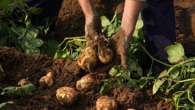 В Гренландия вече гледат зеленчуци и картофи, вследствие на затоплянето
