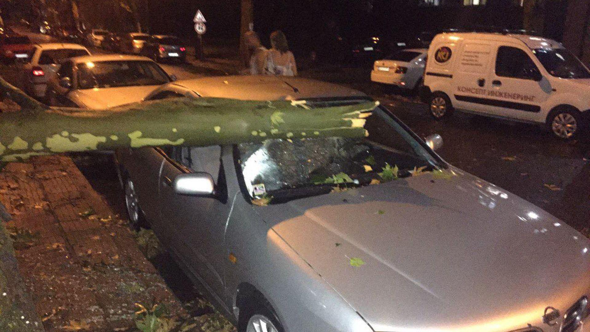 Бурята в Кърджали: Паднало дърво смачка колата на бащата на Караянчева (снимки)