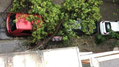 Градушки удариха Кърджали, Враца, Благоевград, буря събори дървета във Варна