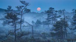 Фото привидения, на Синята граница между деня и нощта