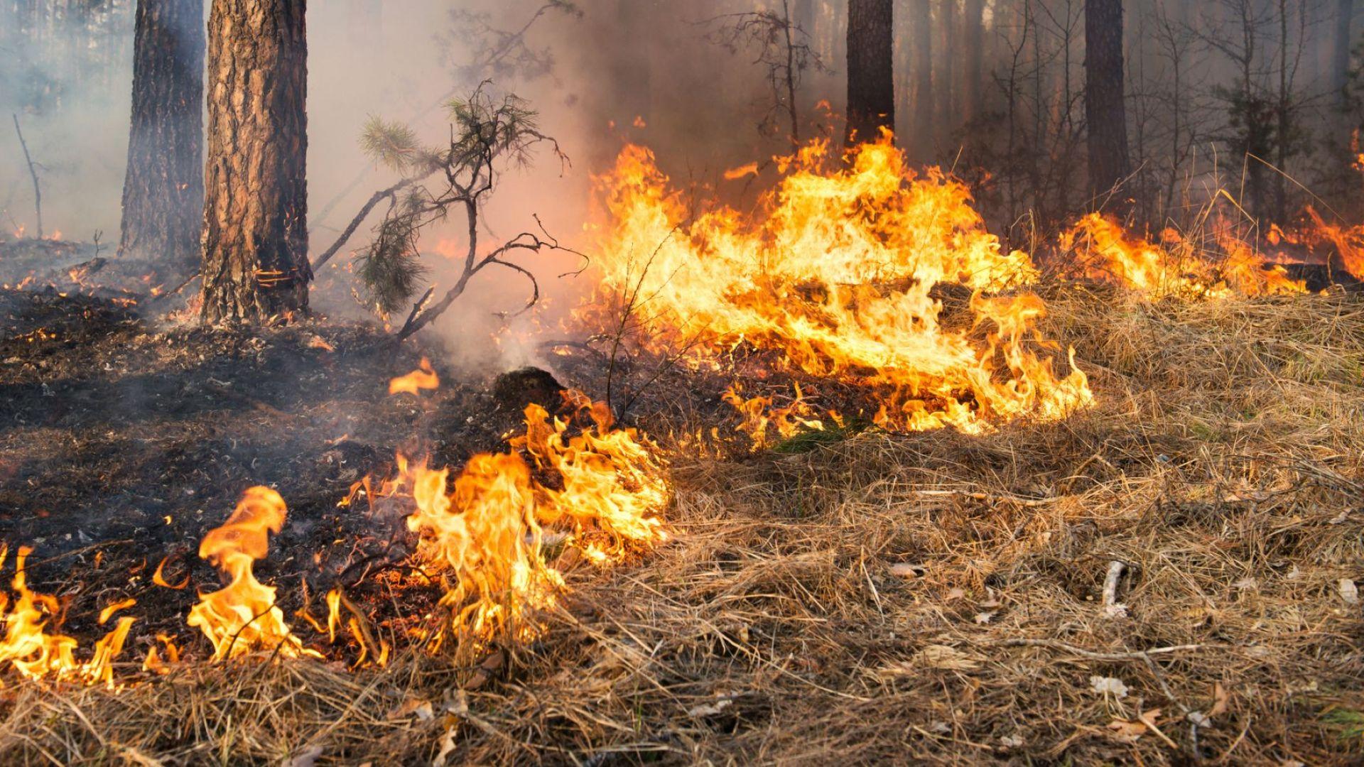 Голям пожар избухна в гората над Свети Влас