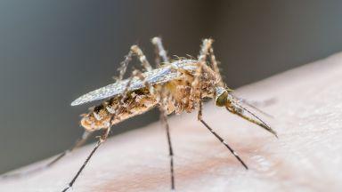 Сибирски учени установиха любимата кръвна група на комарите