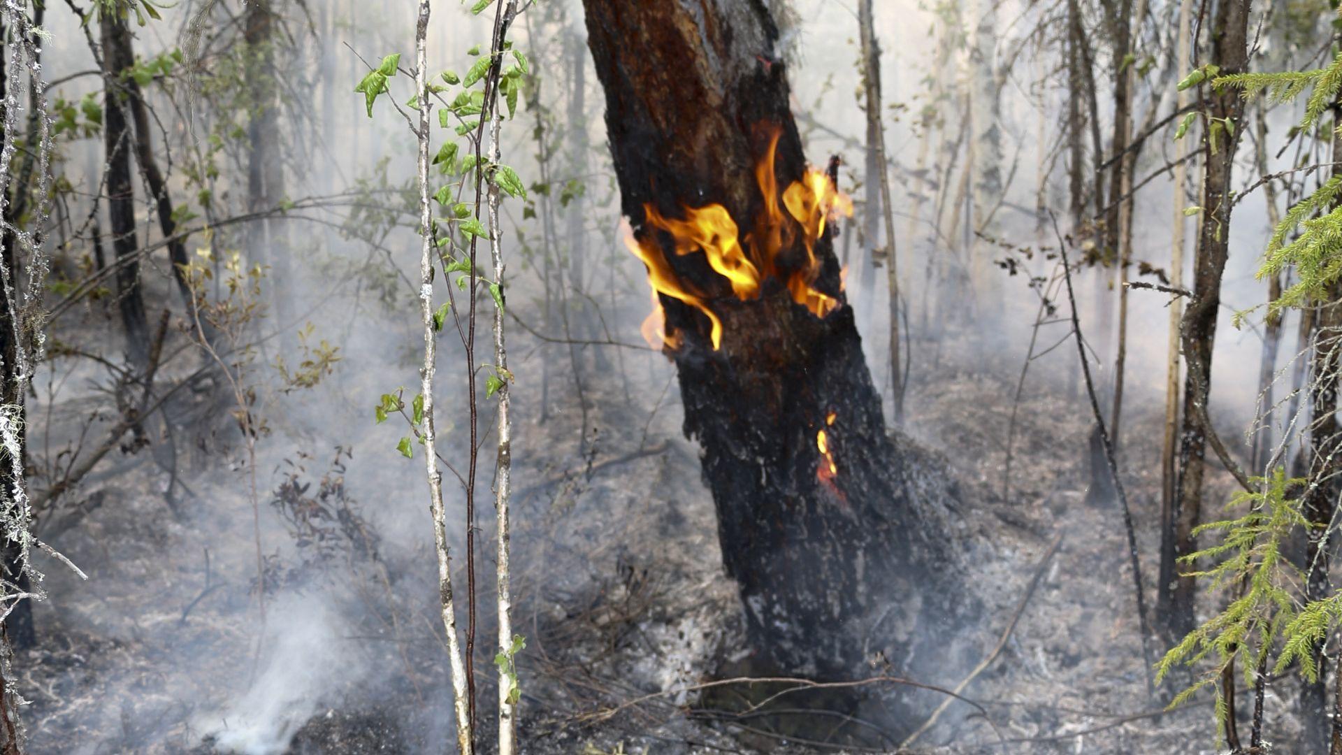 Пожар обхвана гора, треви и храсти край три села в Хасковско