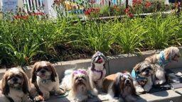 Рекорд на Гинес за снимка на 368 кучета