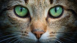 Международeн ден на котката - любопитни факти