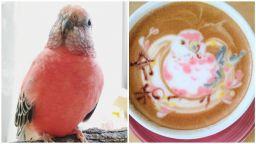 Самоука художничка запали Instagram с Арт Latte на папагали и други птици
