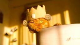 """Елегантни котешки шапки с """"участието"""" на собствената им козина"""