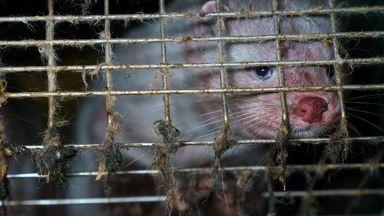 Учени от БАН и СУ: Фермите за ценни кожи вредят на България