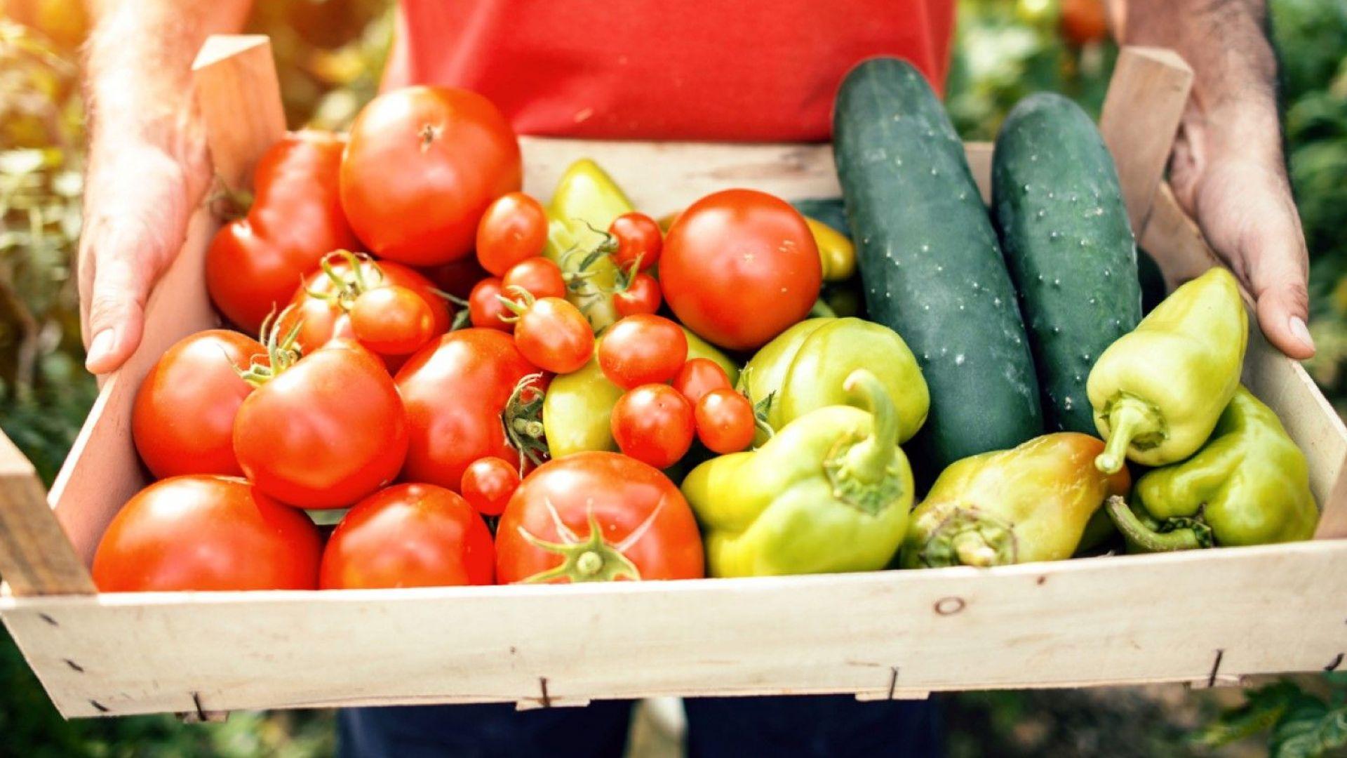 Експерт: Турция и Гърция са водещи  импортни дестинации за доставка на домати  и краставици у нас