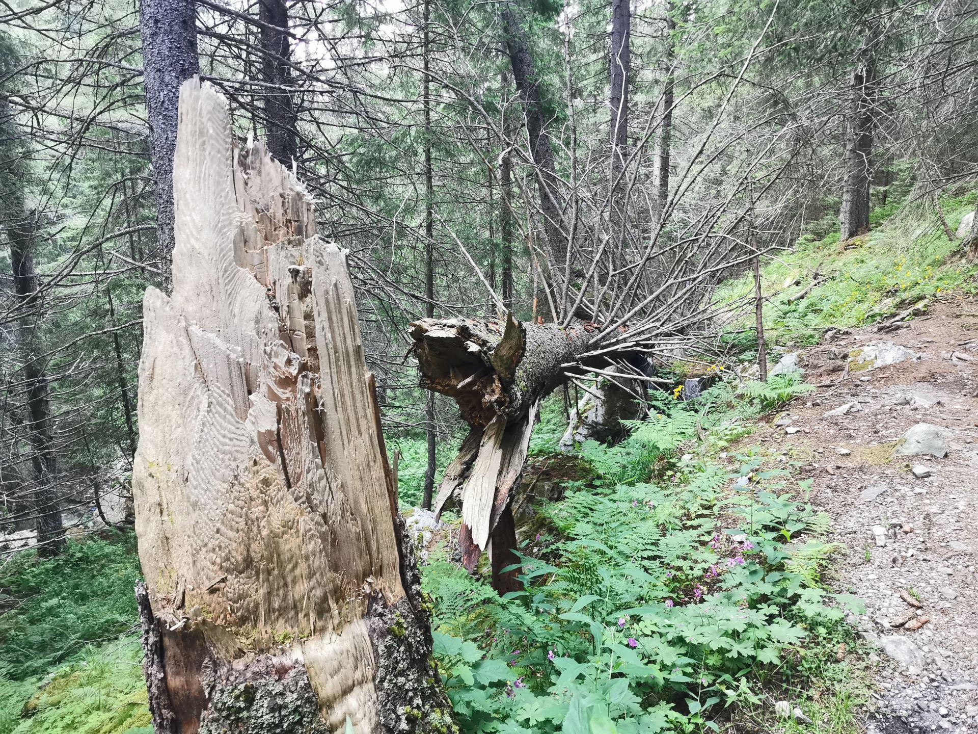 дърво, ударено от мълния