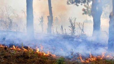 Пожарът край Ветрен е обхванал около 200 дка гора, храсти и пасища