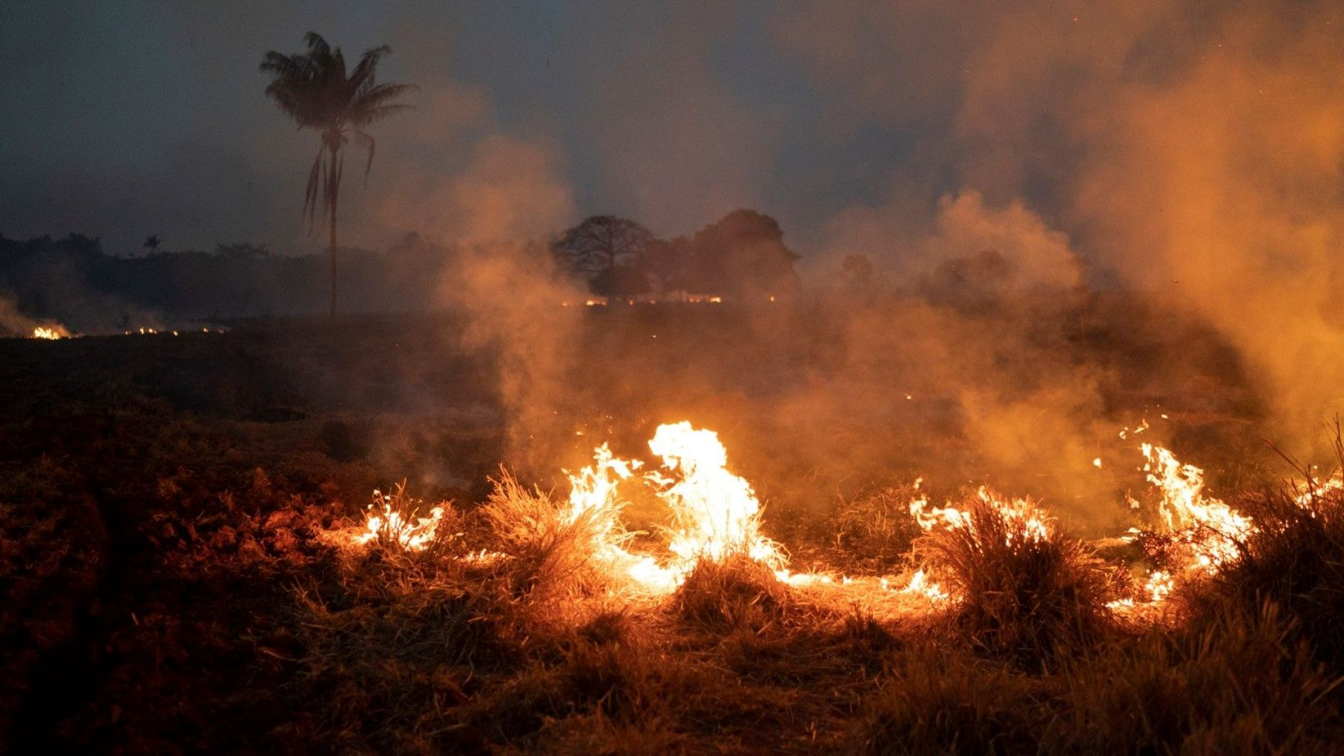 Зад пожарите в Амазония стои световният апетит за бразилско говеждо