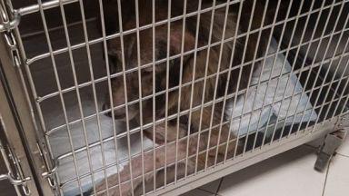 """Завързаха куче на метростанция """"Ломско шосе"""" без вода и храна (снимки)"""