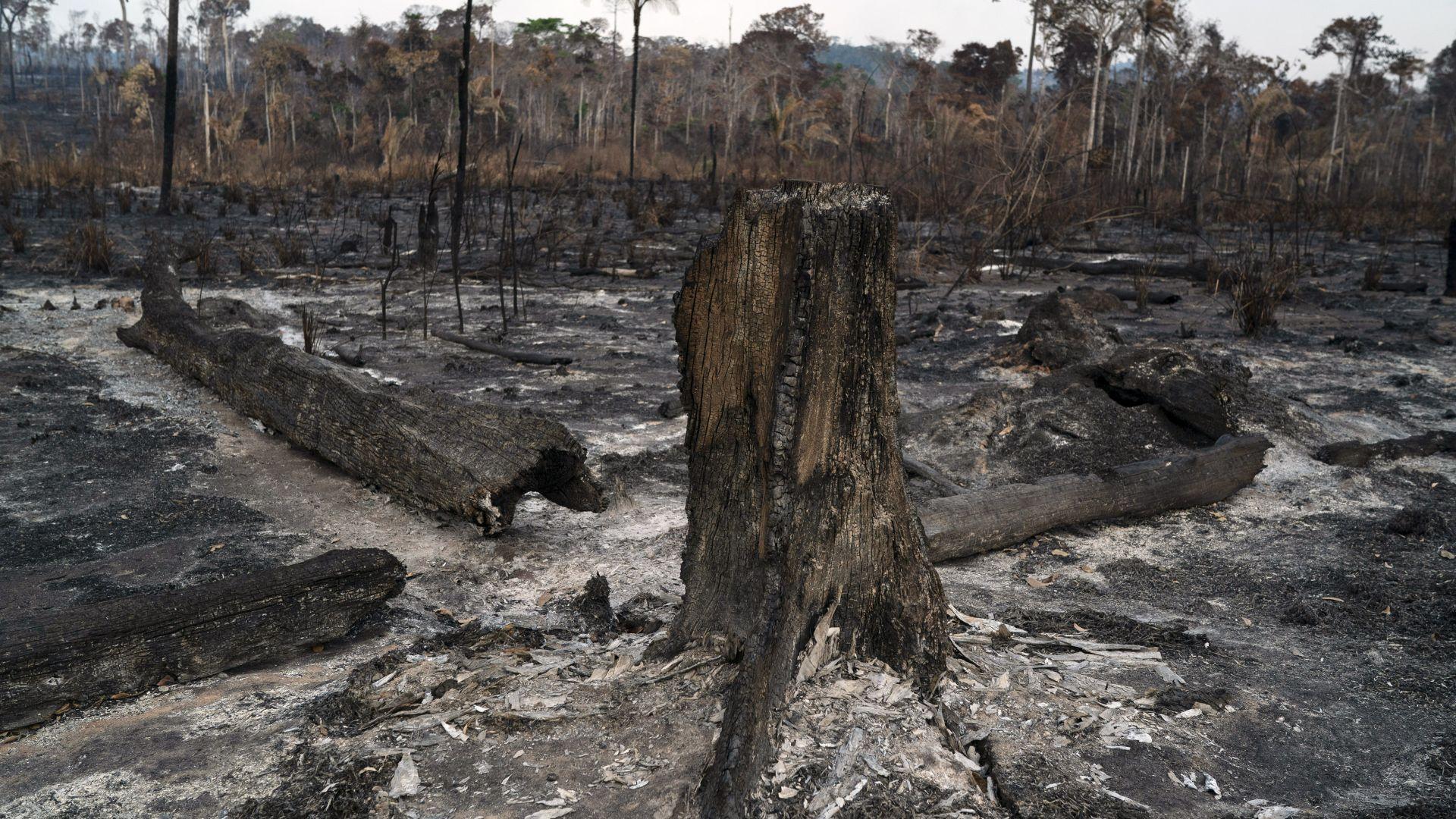 Бразилски министър туитна, че Макрон e кретен заради пожарите в Амазония