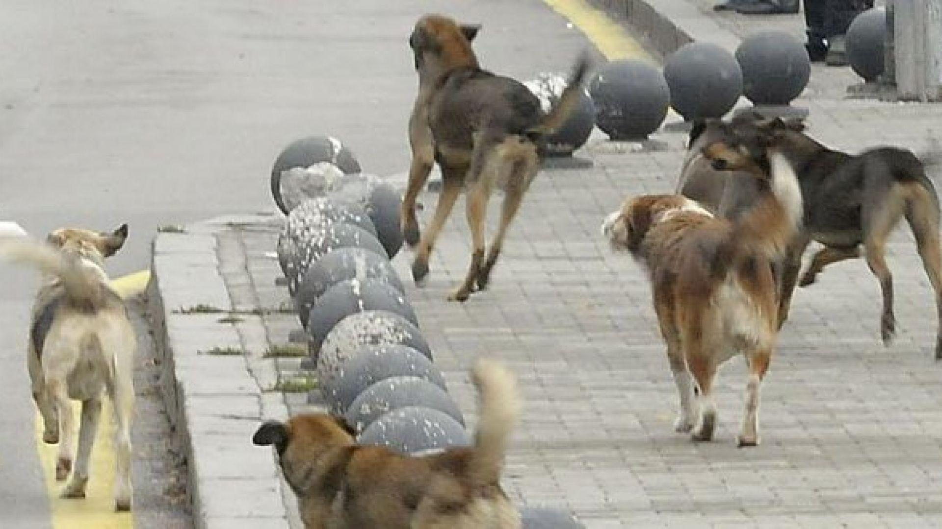 Незаконен кучкарник тормози жители на русенски квартал, предава Нова тв.