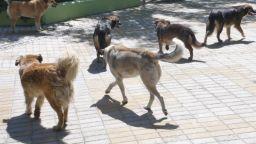 Бездомно куче ухапа дете в училищен двор в София