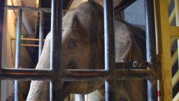 Близки срещи от слонски вид - благородната Артайда от Столичния зоопарк