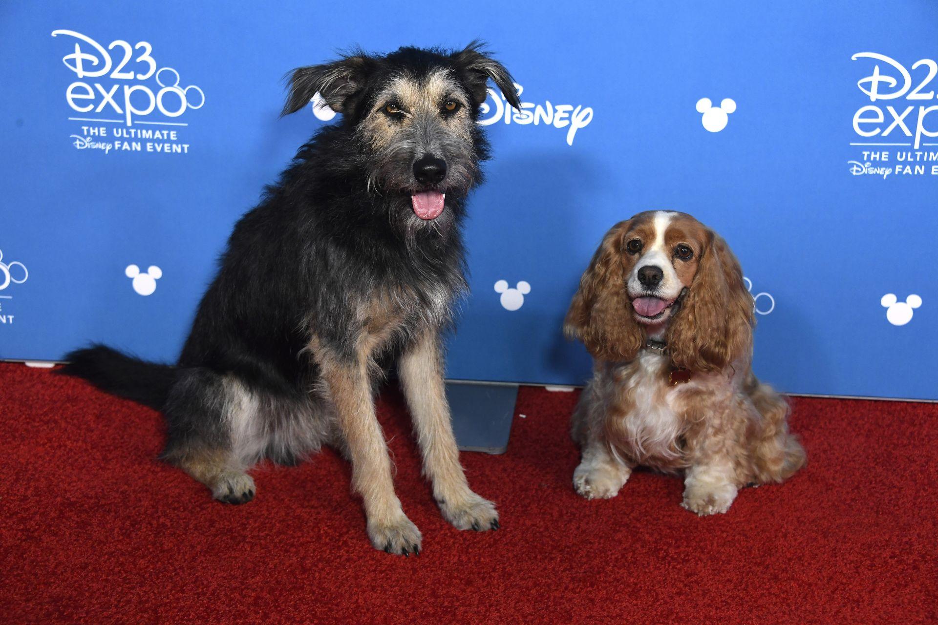 Кучетата, които ще влязат в образите на Лейди и Скитника
