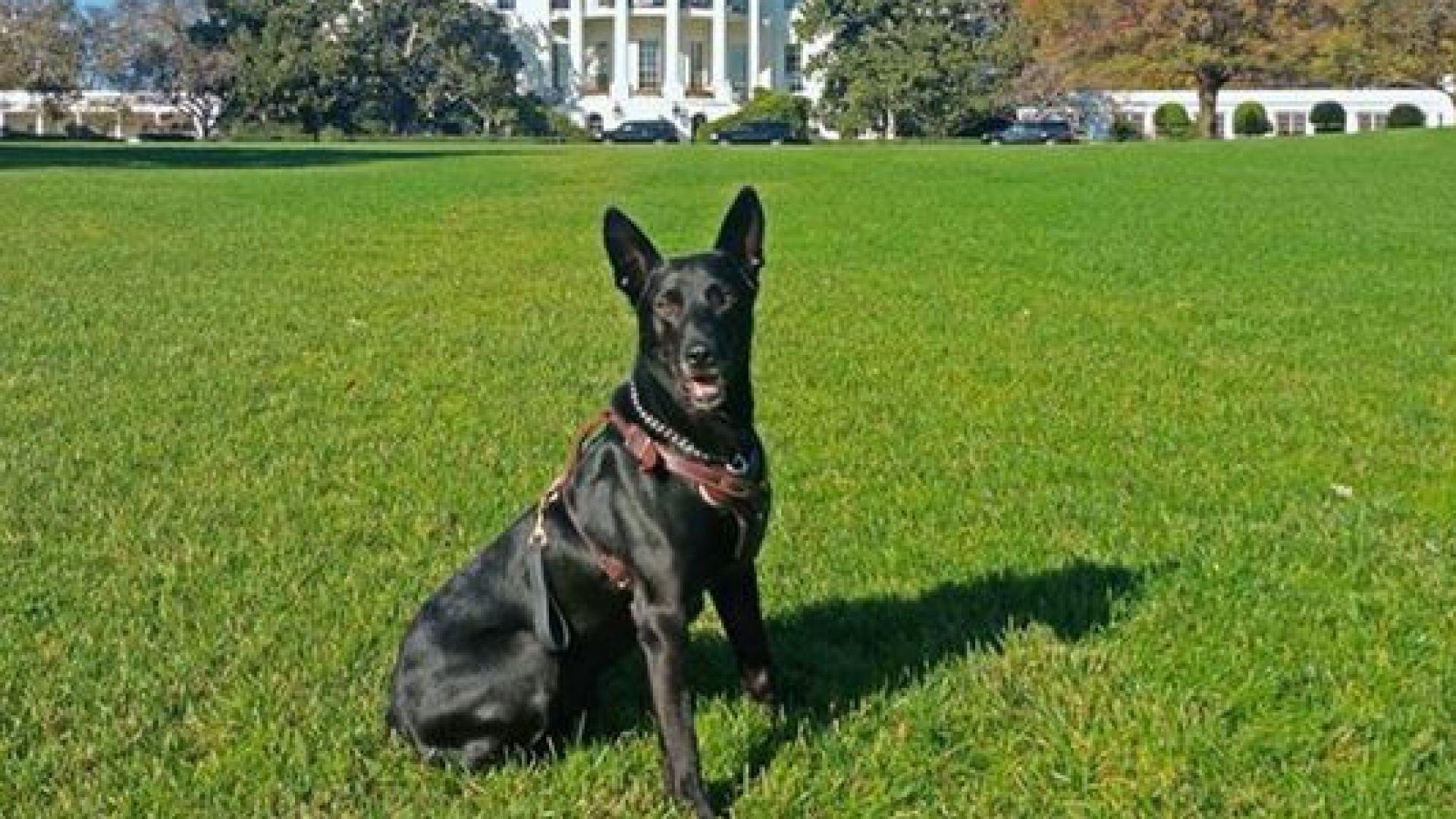 Куче, спасило Обама от нападение, получи британска награда (снимки)