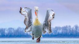 """Птиците - """"фотомодели"""" на годината"""