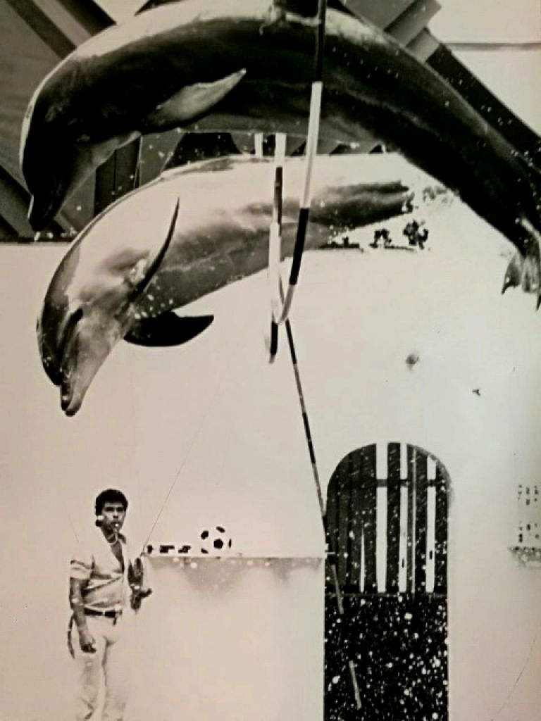 В дните, в които Пламен Георгиев е треньор в делфинариума